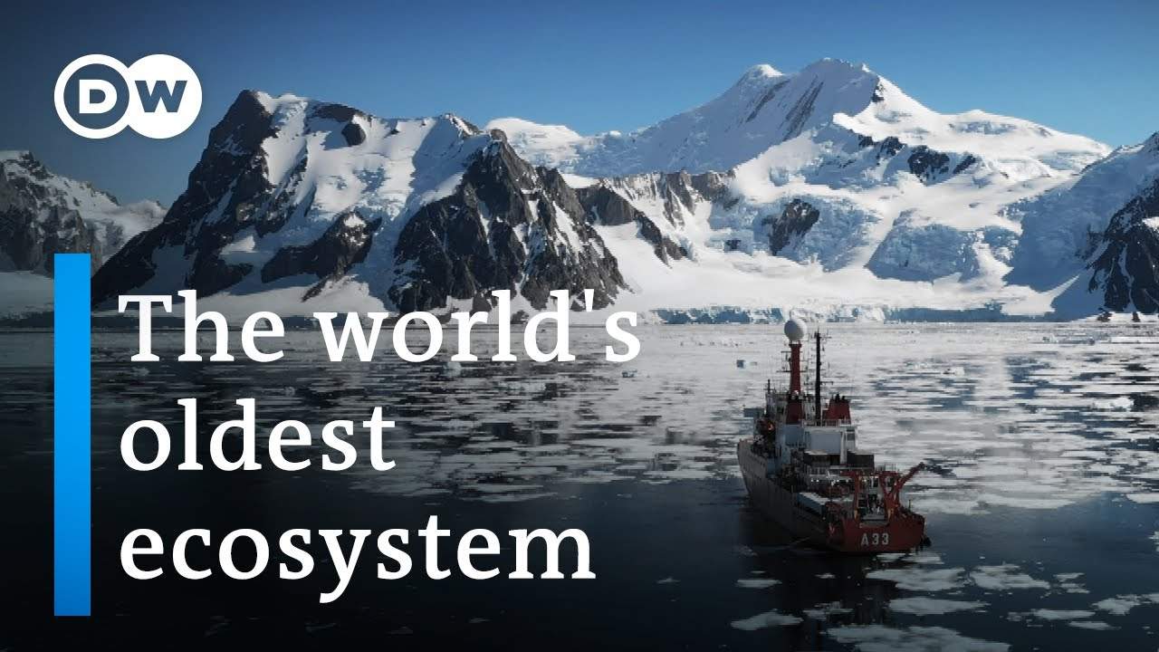 Antarctica: A message from another planet | DW Documentary